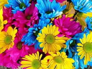 Flower Power Rotbuschtee