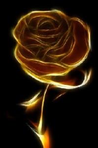 Black Rose Schwarztee