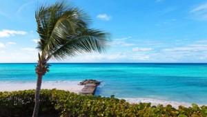Bananentee Karibikzauber Früchtetee