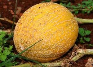 Feige Melone Früchtetee