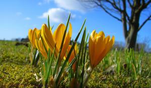Der Frühling kommt bald